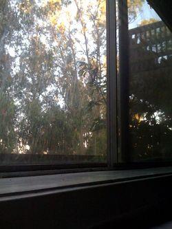 Window.view